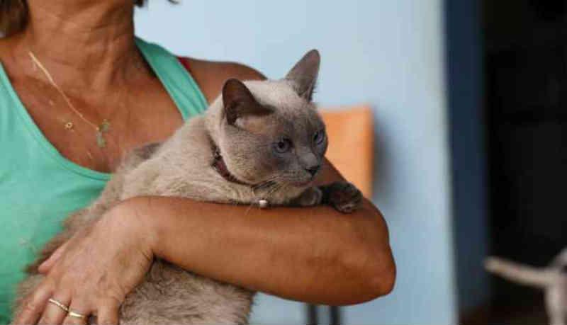 Com população de 40 mil gatos, tutores chegam às 3h no CCZ para mutirão com 500 vagas de castração em Campo Grande, MS