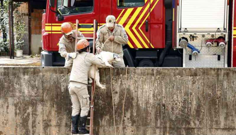 Cachorro cai em córrego no centro e mobiliza Bombeiros em Campo Grande, MS; veja as fotos