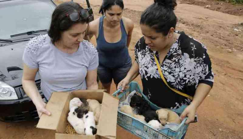 Cuidadoras se mobilizam para salvar ninhadas abandonadas em Campo Grande, MS