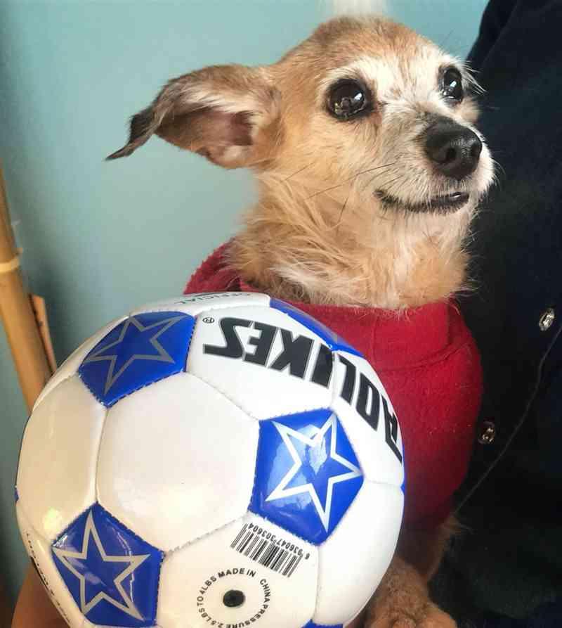 O cãozinho Neymar tem sua própria bola de futebol para brincar na ONG — Foto: Jaqueline Naujorks