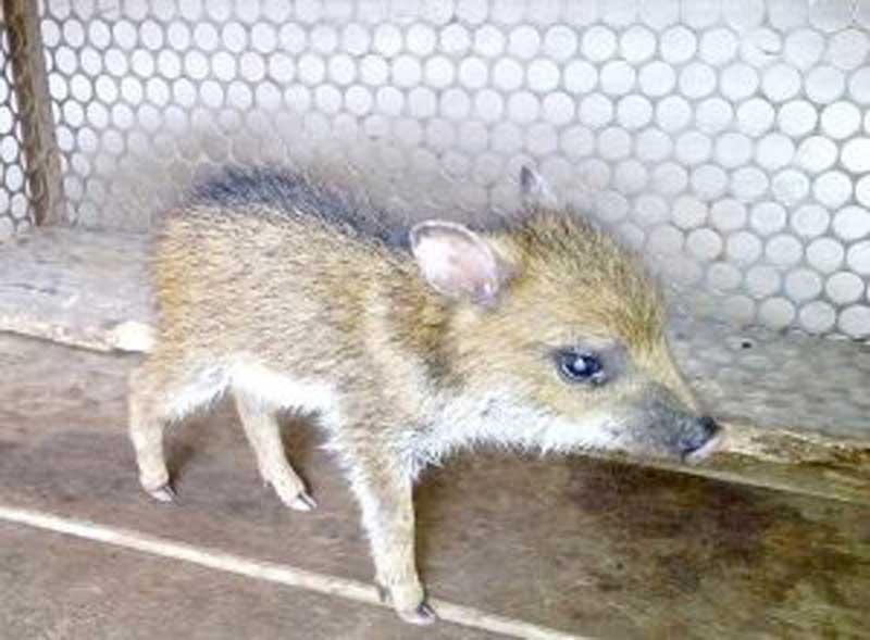 Centro que cuidará de animais silvestres em Lucas do Rio Verde, MT, fica pronto em 2019