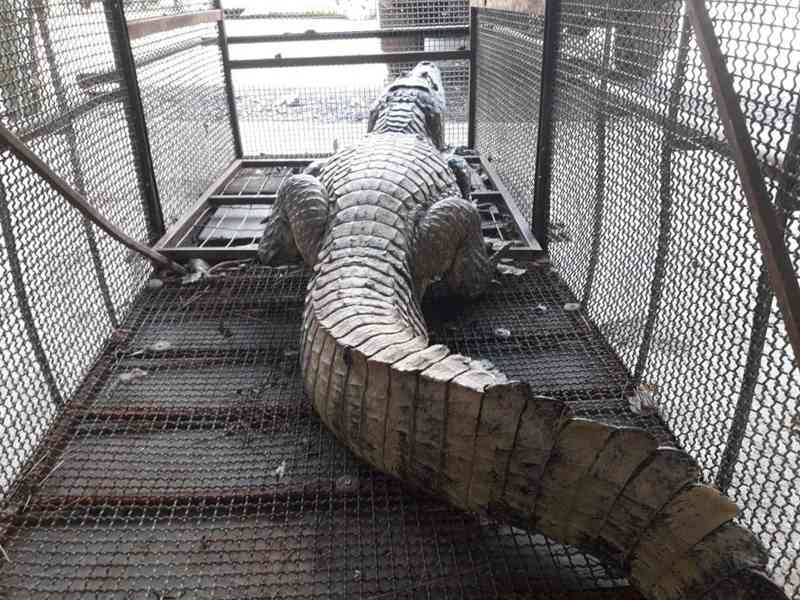 70 animais silvestres são resgatados em média por mês em Mato Grosso — Foto: Polícia Militar de Mato Grosso/Assessoria