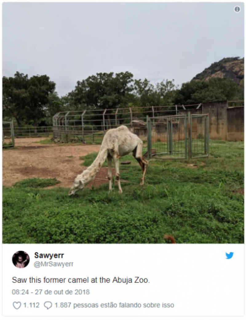 Zoológico na Nigéria é acusado de crueldade após camelo viralizar na net