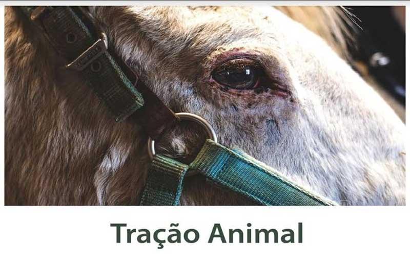 TJPE decide que o Recife terá que regulamentar lei que proíbe circulação de veículos de tração animal