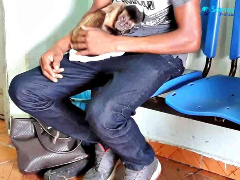 Polícia prende duas pessoas e resgata macacos-prego de cativeiro no Piauí