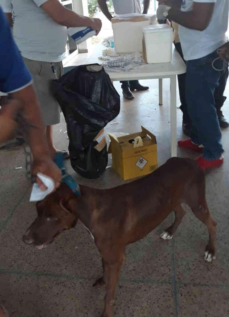 Cães morrem após tomar vacina contra a raiva na zona leste de Teresina (PI) e FMS investiga causa