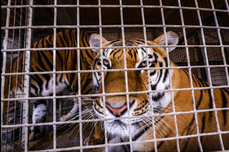 Portugal: circo no 'queimódromo' do Porto não terá animais este ano