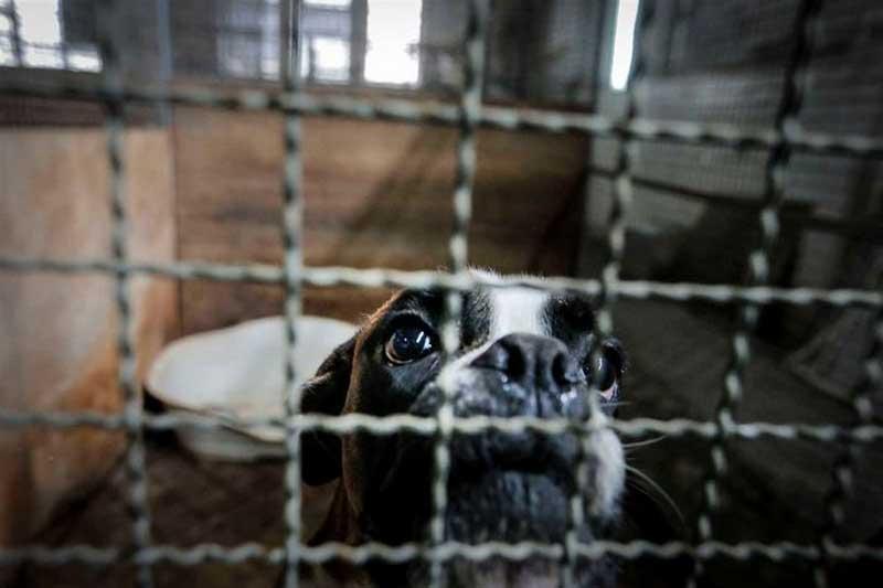 Em Portugal, canis municipais estão sem espaço para acolher mais animais
