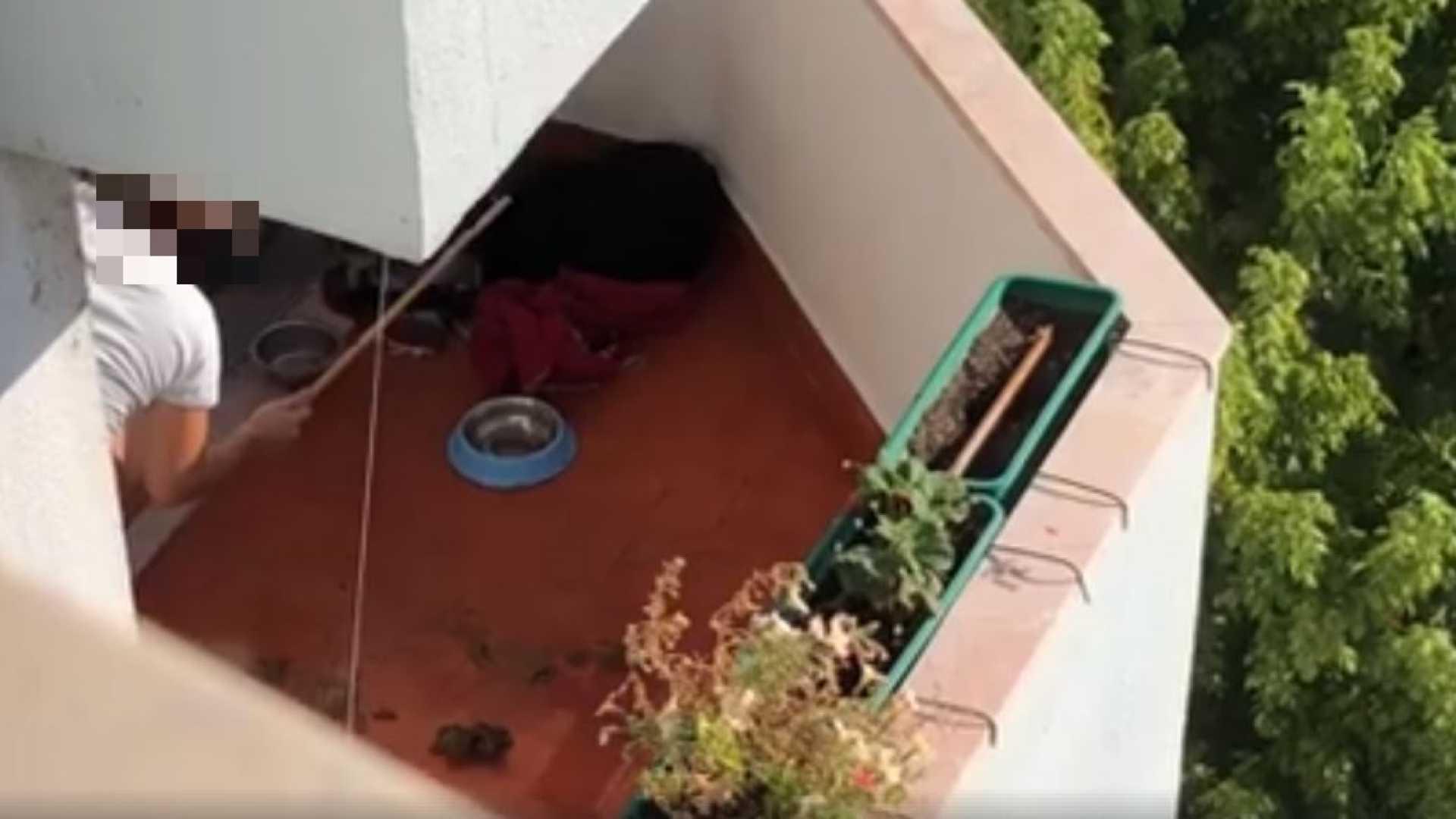 Portugal: mulher filmada a bater no cão gera revolta e ação do IRA