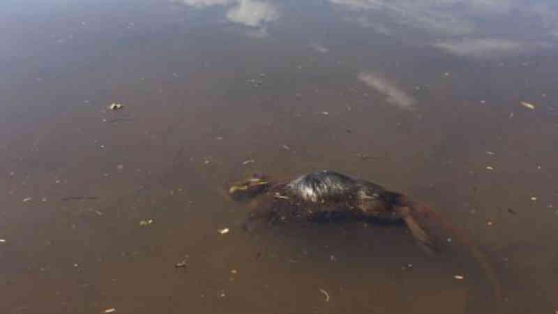 Animais mortos em riacho na Região do Lago em Cascavel (PR) preocupam internauta