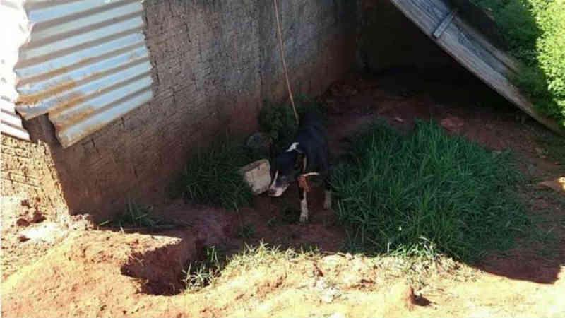 Tutor é multado por deixar cachorro sem água e comida em Cianorte, PR