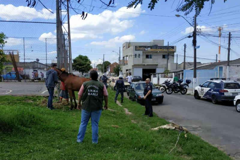 Cavalos vítimas de maus-tratos são resgatados em Curitiba, PR