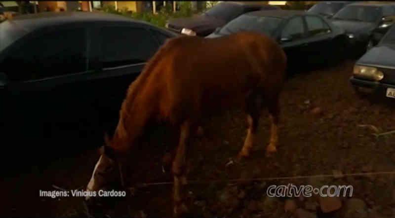 Homem é detido por maus-tratos a égua em Nova Aurora, PR