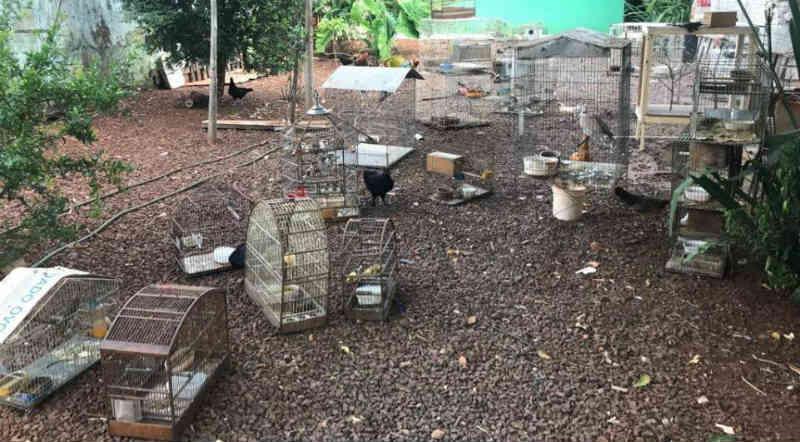 Aves e tartarugas são resgatadas em situação de maus-tratos por Polícia Ambiental em Rolândia, PR