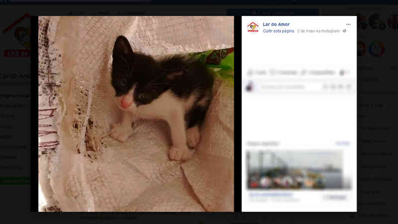 ONG 'Lar do Amor' se prontifica a resgatar animais abandonados em Santarém, PR