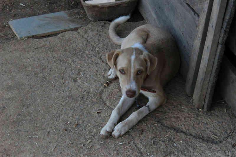 Comissão aprova lei que prevê como maus-tratos acorrentar animais no Paraná
