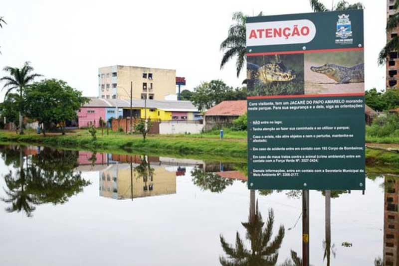 Prefeitura instala placas alertando sobre a presença de jacarés no Monjolo, em Foz do Iguaçu, PR