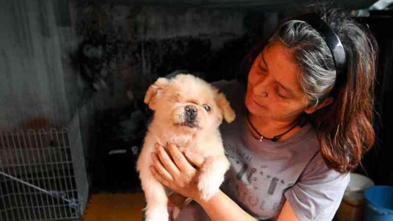 Sem ONG ADA, animais de rua agonizam em Londrina, PR