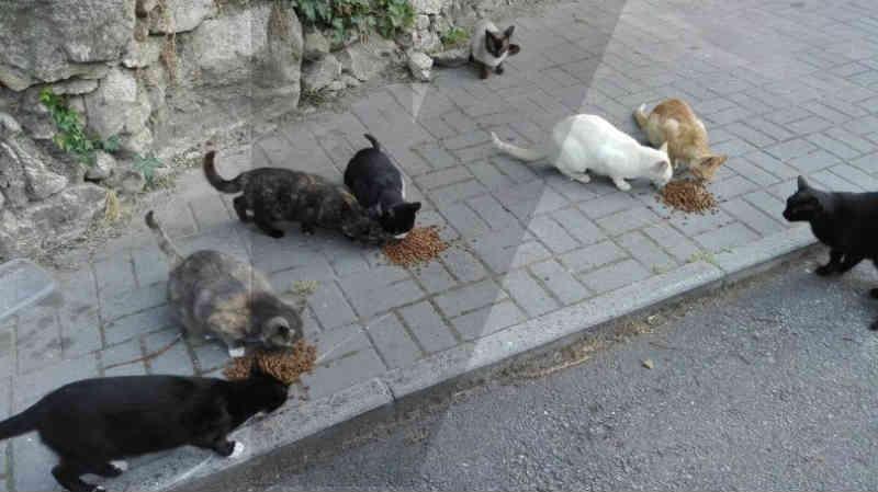 Portugal: 'Há milhares de gatos errantes em Braga a reproduzir descontroladamente'