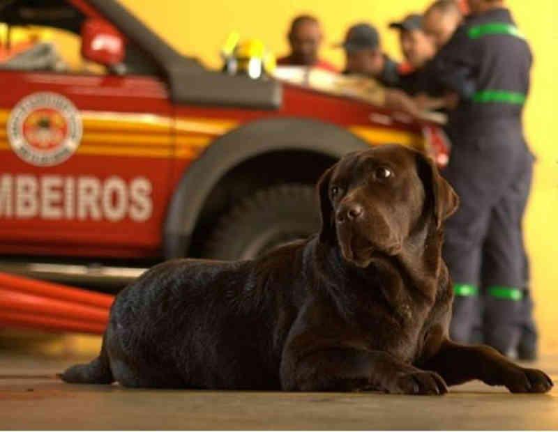 Portugal: Bombeiros Municipais resgatam cadela das águas do rio Lima