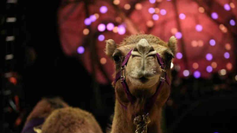 PAN está contra o circo com animais que será montado em Machico, Portugal