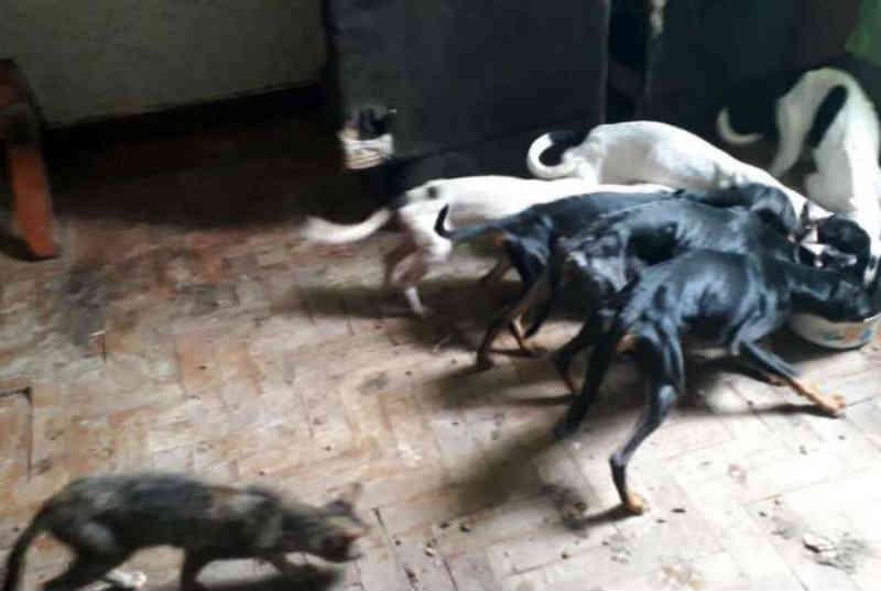 Cães e gatos desnutridos são resgatados de casa no Grajaú, RJ