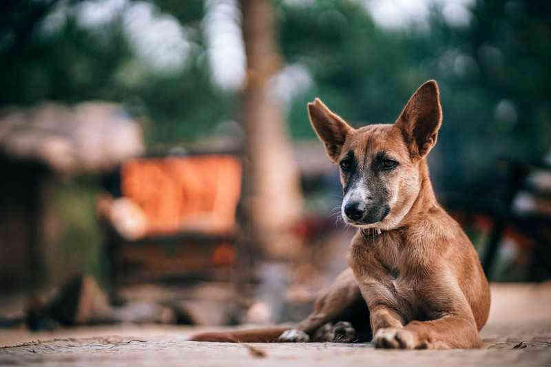Foi sancionada lei que amplia a proteção dos animais no RJ