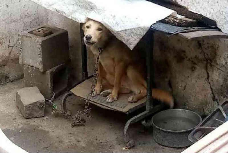 Quatro cães e três gatos vítimas de maus-tratos são resgatados pela polícia em São João do Meriti, RJ