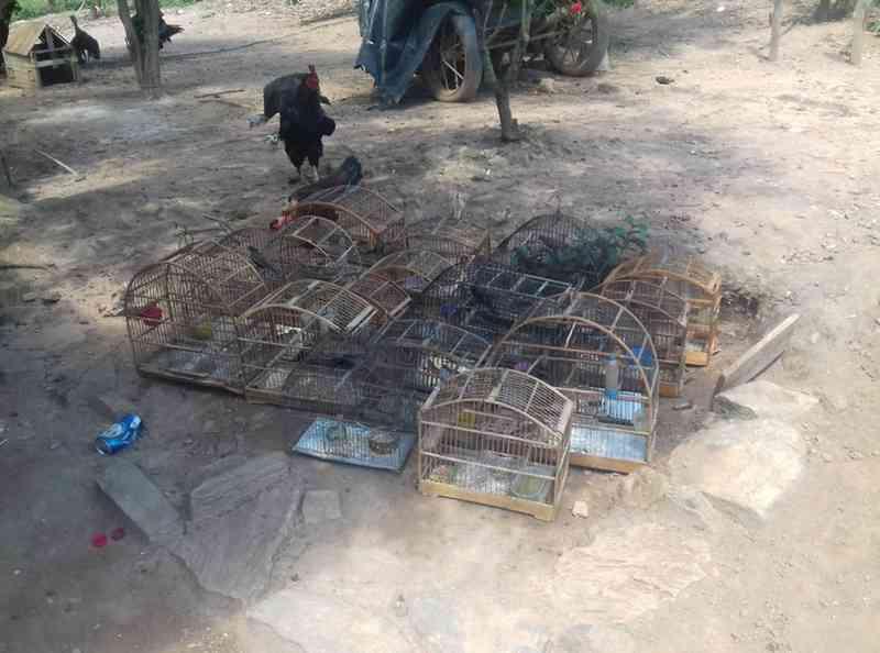 Pássaros foram capturados durante ação em Itaperuna, no RJ — Foto: Divulgação/UPAm