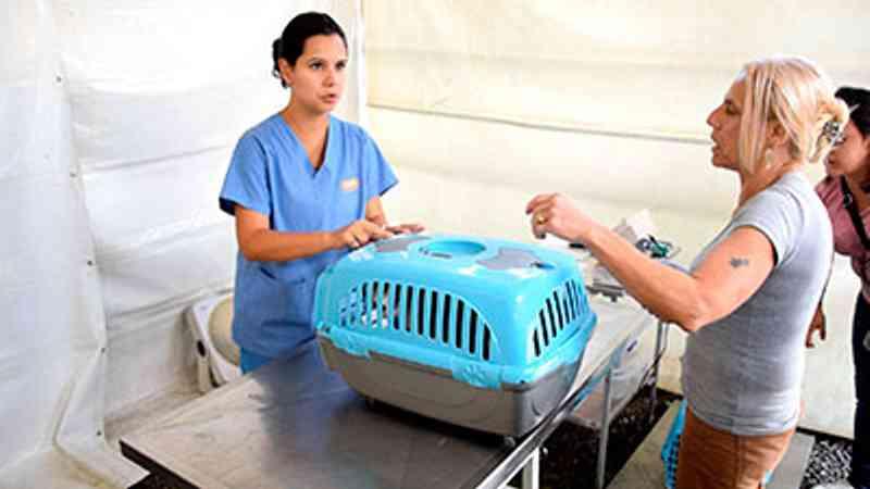 Campanha de castração realiza mais de 850 cirurgias em cães e gatos em Petrópolis, RJ