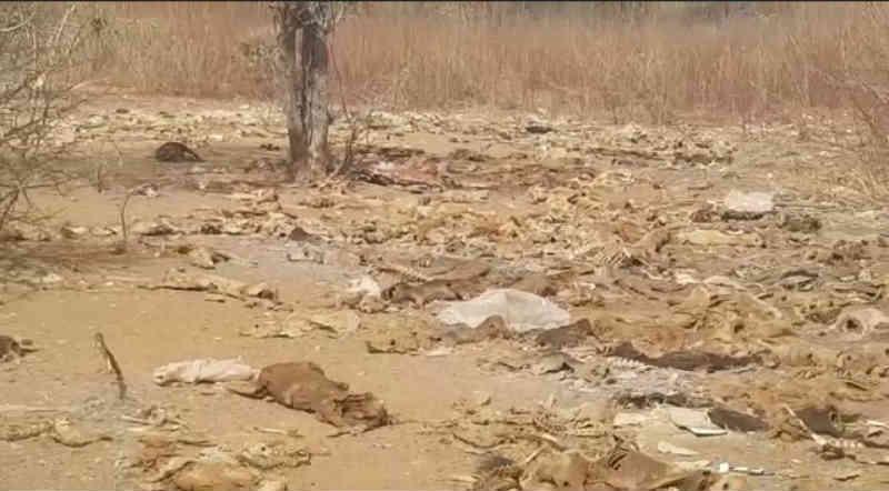 Santuário de animais mortos e doentes é descoberto em Apodi, RN