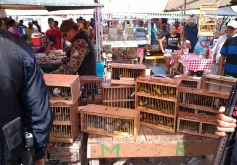 Guarda Municipal resgata tucanos e outras 97 aves na feira de Cidade da Esperança, em Natal, RN