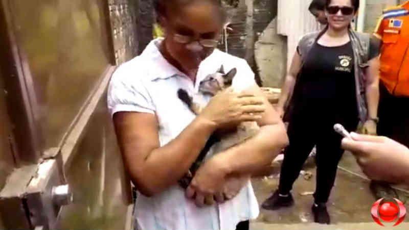 VÍDEO DO RESGATE: Brigada Municipal, Defesa e Bombeiro Civil aliam esforços para salvar gato em Porto Velho, RO