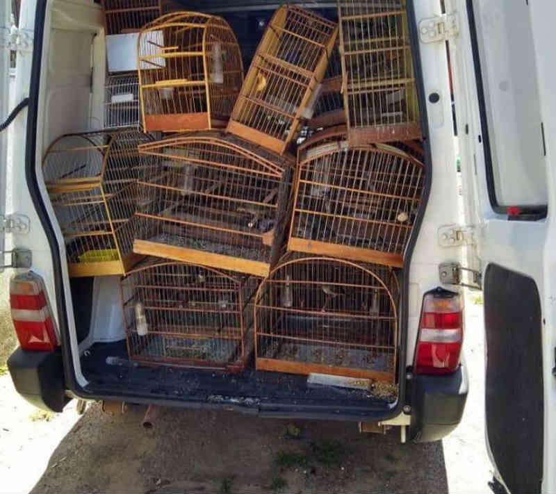 Polícia Civil apreende aves que seriam usadas para rinha em Cachoeirinha, RS