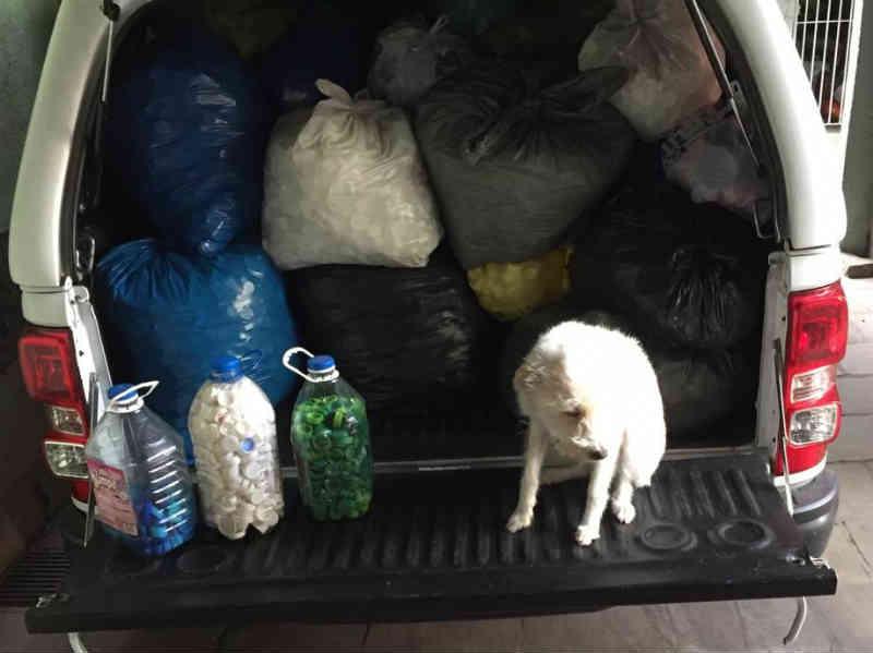 ONG de proteção animal precisa de voluntários em Caxias do Sul, RS