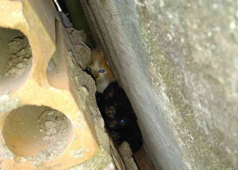 Bombeiros de Ivoti (RS) resgatam gatinhos presos em parede