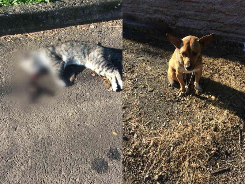 Cães e gatos podem estar sendo envenenados em Ivoti, RS