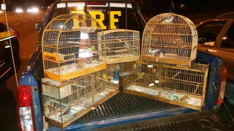PRF prende homem que transportava animais silvestres no litoral gaúcho