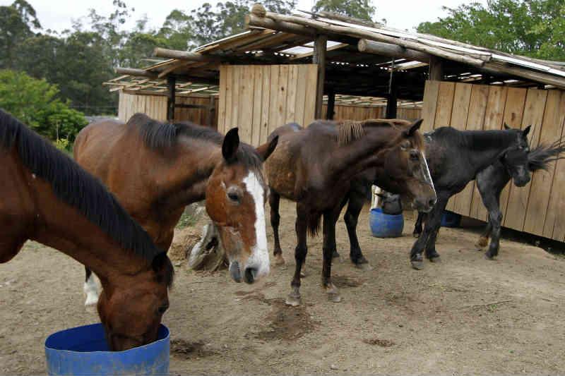 ONG atua há 10 anos resgatando animais vítimas de maus-tratos em Porto Alegre, RS