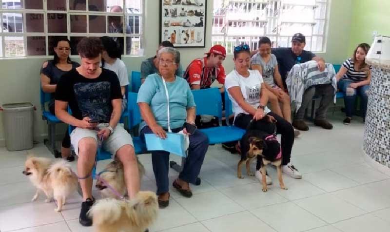 Programa de castração gratuita de São José do Campos (SP) abre 1.000 vagas