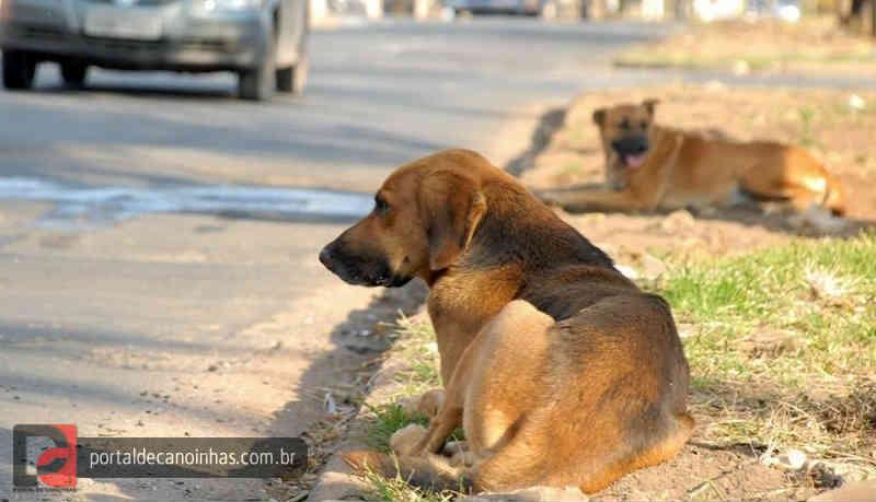 Prefeito de Canoinhas (SC) tenta revogar lei de proteção aos animais, mas vereadores não aceitam