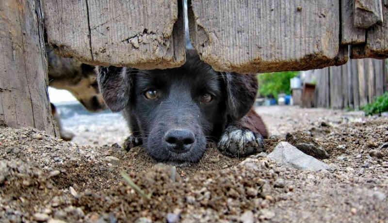 Prefeitura de Xanxerê (SC) lança número de telefone para receber denúncias de maus-tratos contra animais