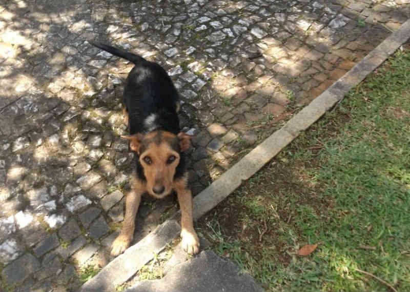 Cadela e seis filhotes recém-nascidos são abandonados no Paço Municipal de Içara, em SC