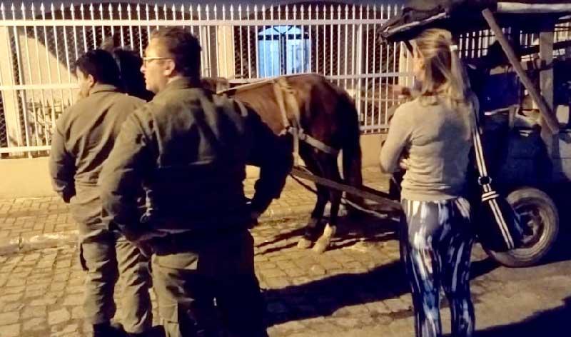 Cavalo vítima de maus-tratos é resgatado em Itapema, Santa Catarina