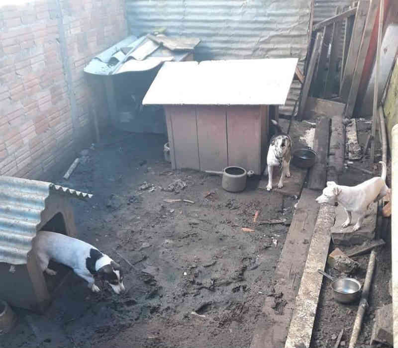 Proteção Animal e Polícia Civil firmam parceria para investigar casos de maus-tratos em Lages, SC
