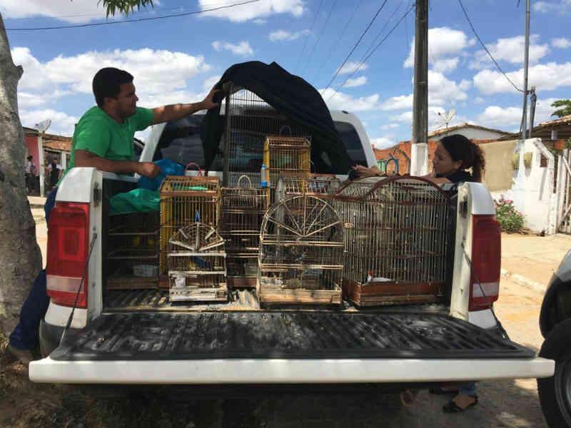 Mais de 70 animais silvestres são apreendidos pela Adema e Polícia Ambiental em Lagarto, SE