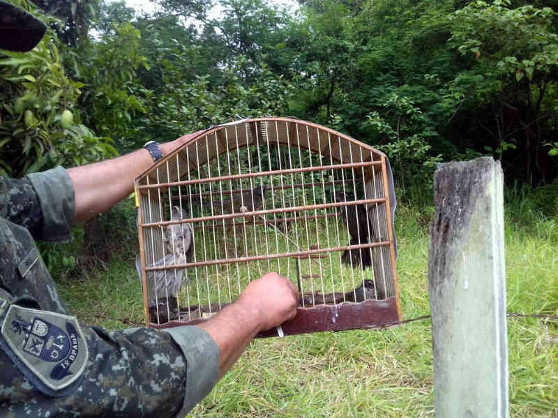 Polícia Ambiental solta 46 aves mantidas em cativeiro em Araras (SP) e aplica multa de R$ 20 mil