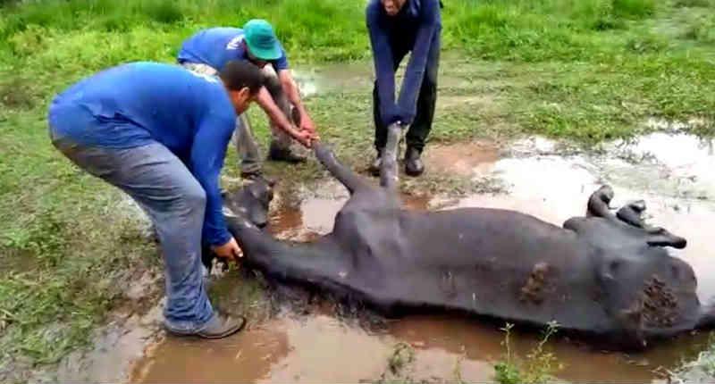 Cavalo vítima de maus-tratos é sacrificado em Catanduva, SP
