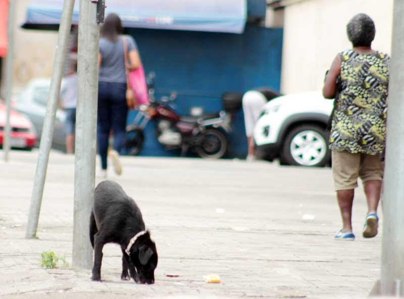 Animais abandonados preocupam Câmara de Guarujá, SP