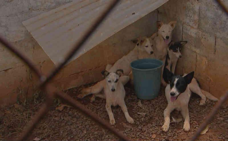 Cães achados amarrados em sacos plásticos são tratados em Centro de Zoonoses em Pilar do Sul, SP